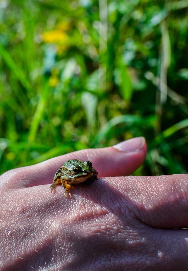 Insects and a frog in the grass