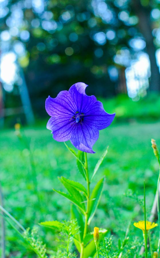 Photo gallery of plants