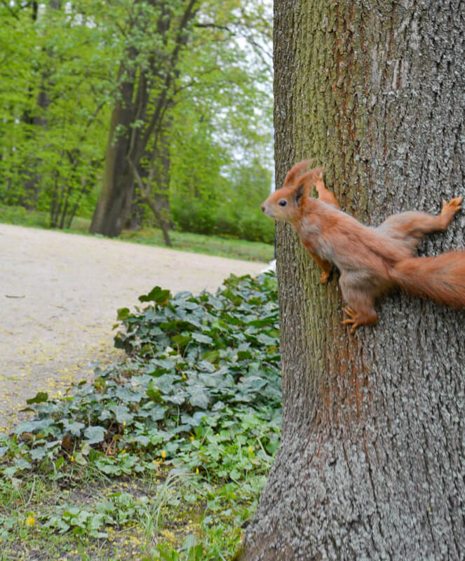 The squirrel in the park